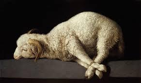 Lamb images