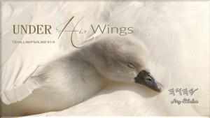 YHWH Wings