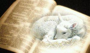 YHWH Lamb